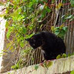 Katze auf der Parkmauer